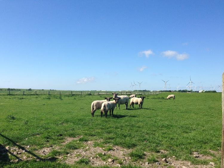 Typisch Nordfriesland
