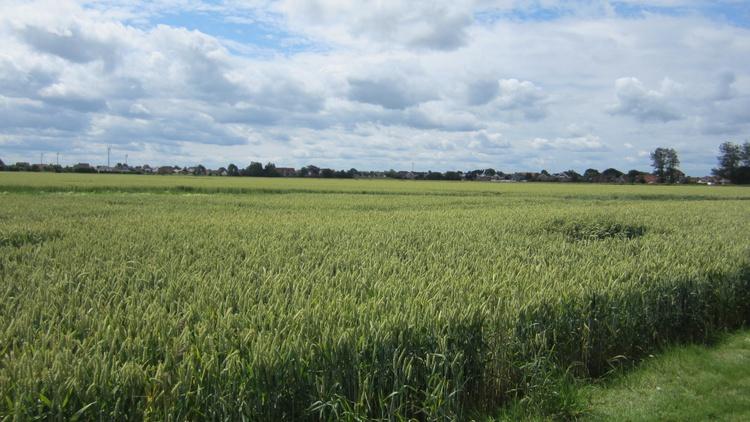 Weiter Blick über das Feld und die Stille der Natur geniesen