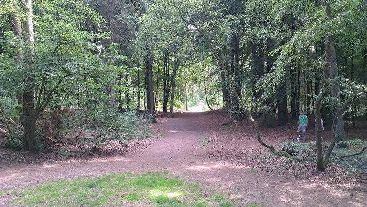 Wanderwege in Wald und Heide